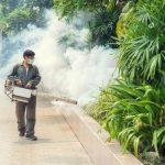 Effective Pest Control And Pest Management Techniques